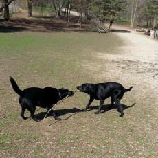 Muttland Meadows Dog Park Grafton WI