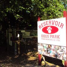 Reservoir Dogs! Park Dog Park in Phoenixville PA