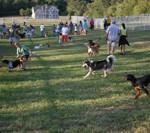 Rotary Dog Park