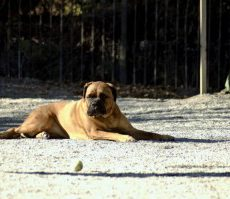 Schuylkill River Park Dog Run in Philadelphia, PA