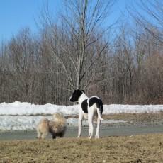Sunset-Ranch-Bark-Park-Dog-Park-in-Honesdale-PA.jpg