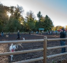 Tails and Trails Japanese Gulch Dog Park