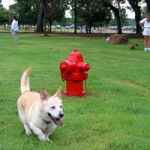 Tipps Canine Hollow Dog Park