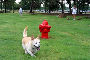 Tipps Canine Hollow Dog Park