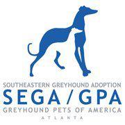 Southeastern Greyhound Adoption - GPA Atlanta