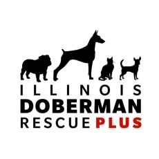 Illinois Doberman Rescue