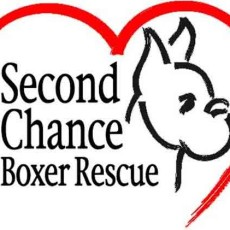 Second Chance Boxer Rescue