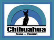 Chihuahua Rescue and Transport
