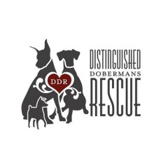 Distinguished Dobermans Rescue