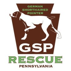 German Shorthaired Pointer Rescue of PA