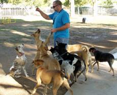 Jacobs Park Dog Park in Tuscan AZ