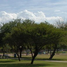 Mitchell Park Dog Park in Tempe, Arizona