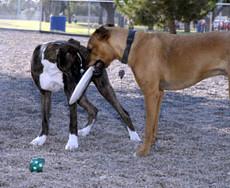 Palo Verde Park Dog Park in Tuscan AZ