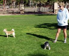 Reid Park - Miko's Corner Playground Dog Park in Tuscan AZ