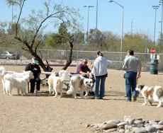 Udall Park Dog Park in Tuscan AZ