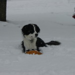 Signs of Hypothermia in Dogs