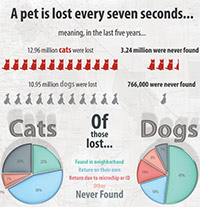 Reasons to microchip your pet