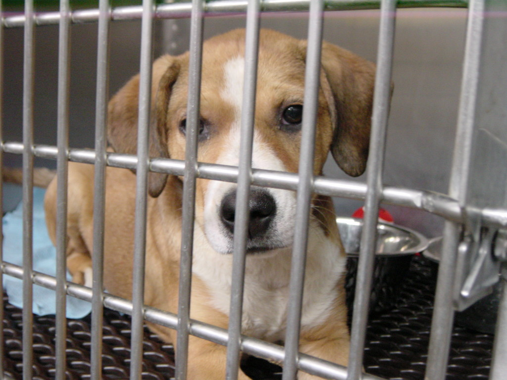 6 Ways To Help Homeless Pets And Animal Shelters