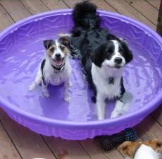 dog park etiquette - Find a dog park