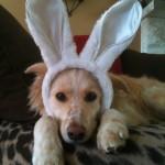 Keep Your Dog Safe On Easter – Easter Pet Safety Tips