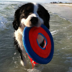 Abba with frisbee