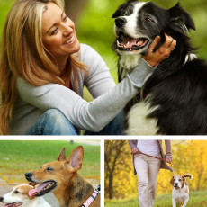Affordable and reliable dog walking/sitting services