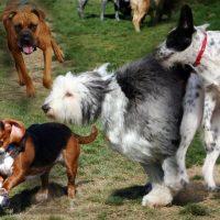 Henderson Bark Park