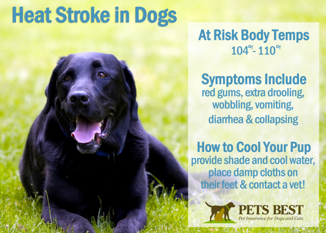 How To Tell If Your Dog Is Having A Heat Stroke Infographic