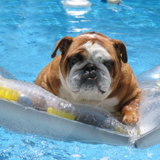 Summertime Dangers for Dogs