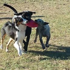 Stillwaggin Dog Park
