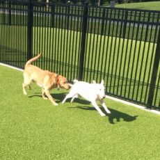 Triangle Dog Park in Rising Sun Maryland