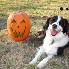 Dog Halloween Safety Tips