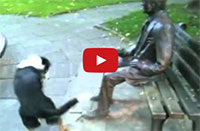 Statue Won't Play Fetch With Dog