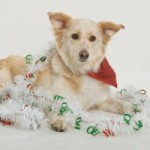 Top 5 Pet Safety Tips for the Holidays to Ensure Your Dog has a Safe and Merry Christmas