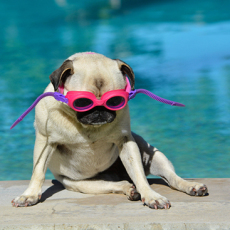 Top Tips to Keep Pets & Wildlife Safe Around Your Pool