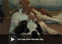 Cat Hugs Giant Adorable Dog