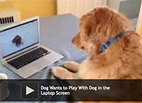 Dog Wants to Play With Dog in the Laptop Screen