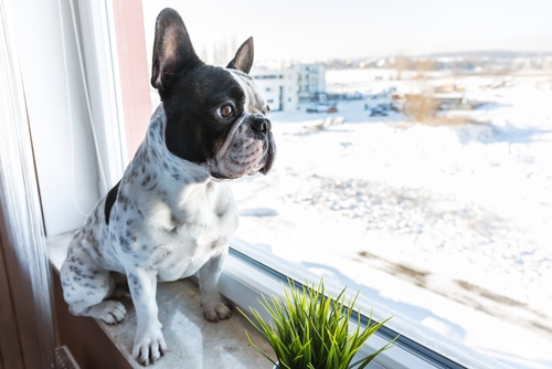 Easy Ways to Pet-Proof Your Home