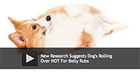 New Research Suggests Dog's Rolling Over NOT For Belly Rubs