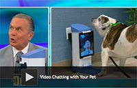 Video Chatting with Your Pet