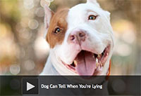 Dogs Can Tell When You're Lying