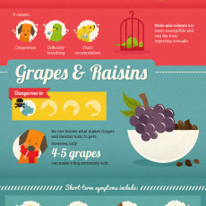 Grapes and Raisins Toxic Food for Pets