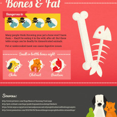 Bones and Fat Toxic Food for Pets