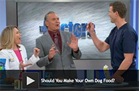 Should You Make Your Own Dog Food
