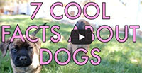 7 Cool Facts About Dogs