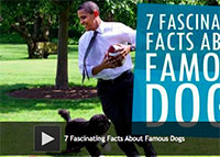 7 Fascinating Facts About Famous Dogs