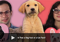 Is That a Dog Fact or a Cat Fact