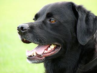 Most Popular Dog