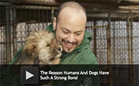 The Reason Humans And Dogs Have Such A Strong Bond