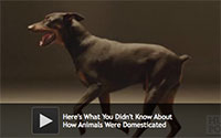 What You Didn't Know About How Animals Were Domesticated